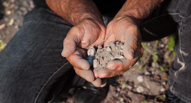 De la terre de vignoble tenues au creux des mains