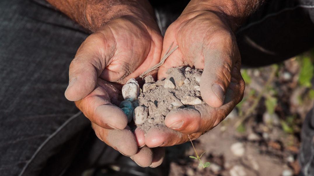 De la terre de vignobles tenues au creux des mains