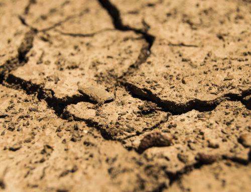 Canicule : importance du sol dans l'hydratation de la vigne
