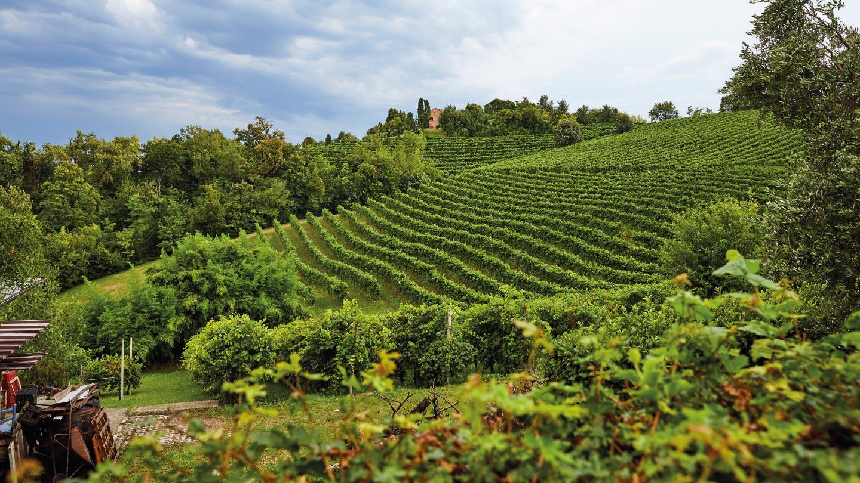 Vignobles italiens Conegliano
