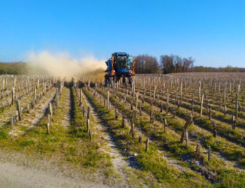 L'argile bentonite pour les vignes : quels sont les avantages ?